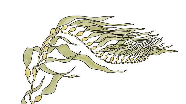 SEAWEEDS for Whetstone Magazine